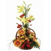 interflora_product_00535