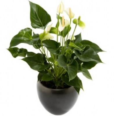 interflora_product_300110107