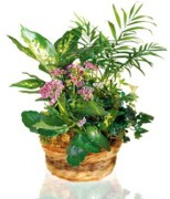 interflora_product_4234